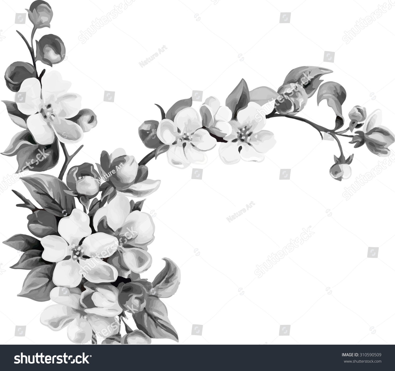 Cherry Blossom Tree Black And White: Vector Illustration Cherry Blossom Flowers Leaves Stock