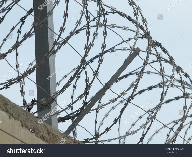 Wall Barbed Razor Wire Wheels Stock Photo 310666994 - Shutterstock