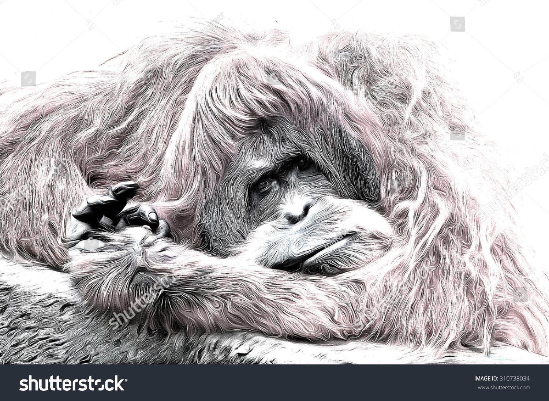 Uncategorized Orangutan Drawing cute adult orangutan drawing filter stock illustration 310738034 a filter