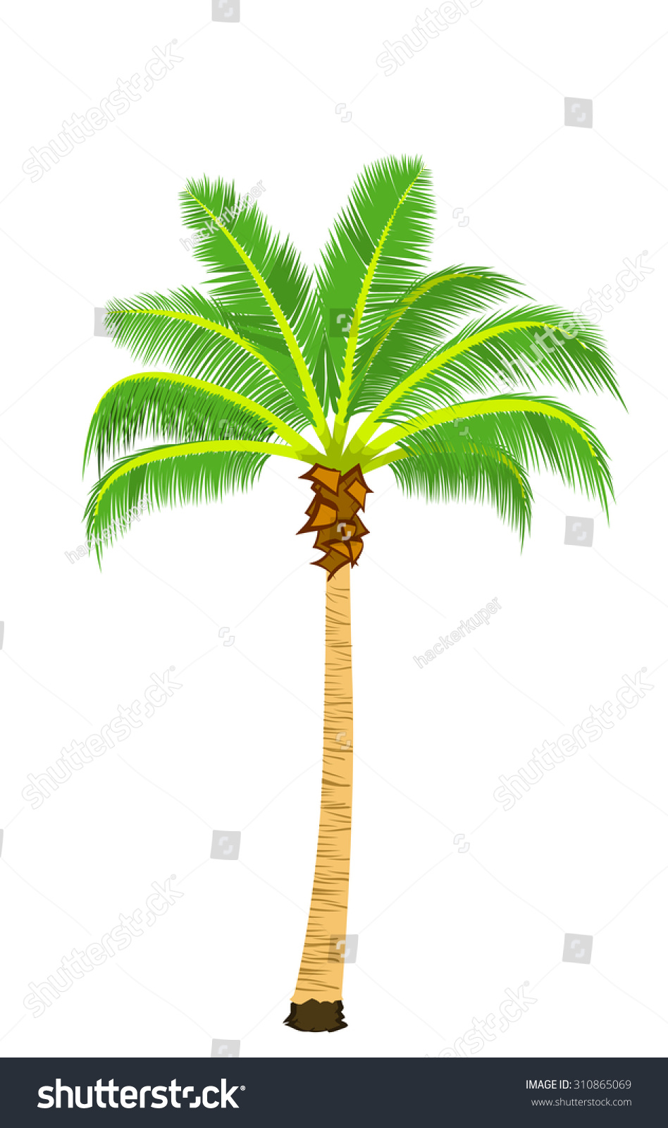 Vector Realistic Palm Tree Illustration Colorful Stock Vector ...