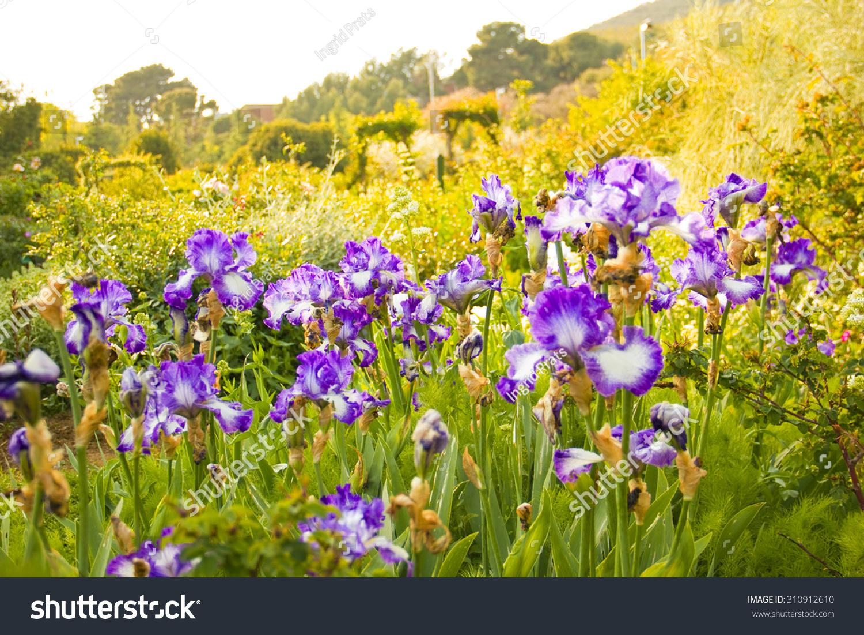 Beautiful field flowers spring spain stock photo edit now beautiful field of flowers at spring in spain izmirmasajfo
