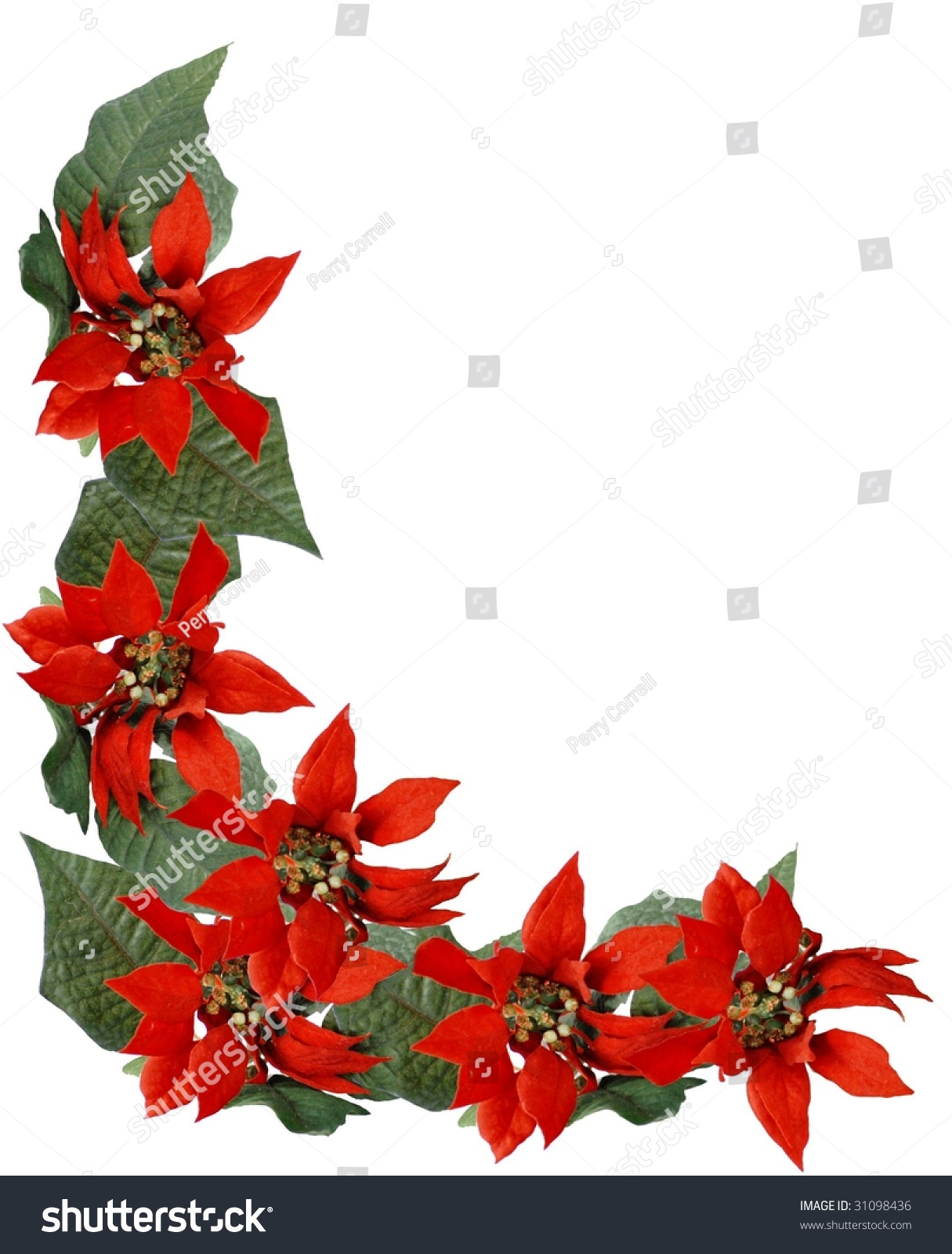 Christmas Holiday Border Frame Of Red Poinsettia Flowers And Green Leaves Isolated On White Vertical
