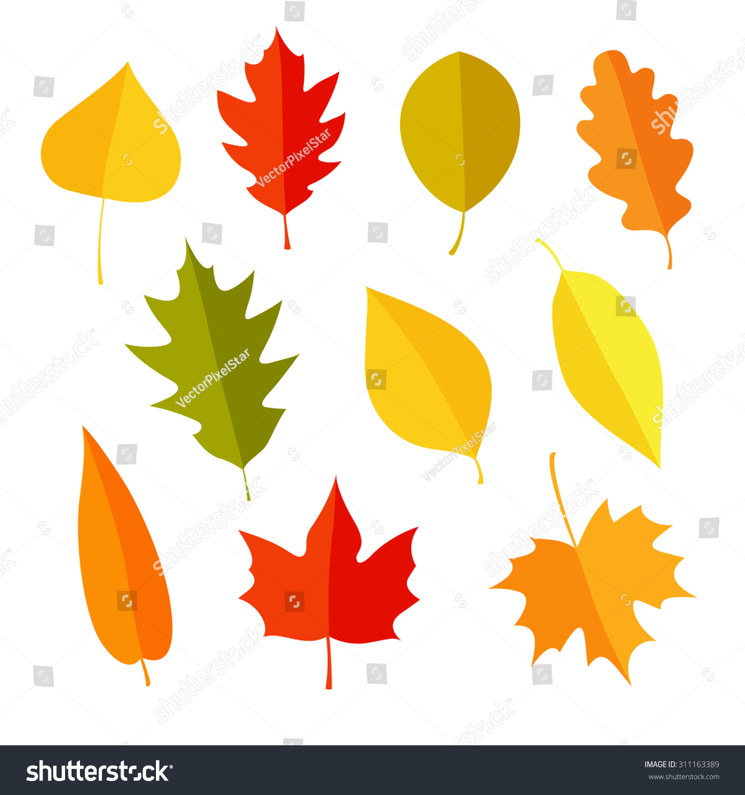 Autumn Leaves Set Isolated On White Stock Vector Royalty Free 311163389
