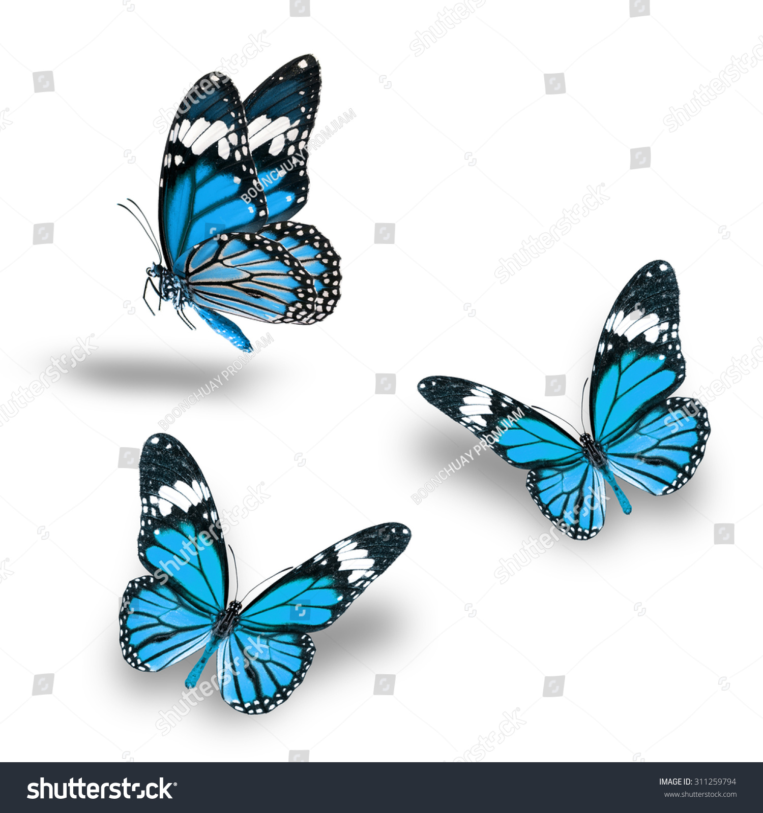 Beautiful Light Blue Bedrooms: Beautiful Light Blue Butterfly Flying Up Stock Photo