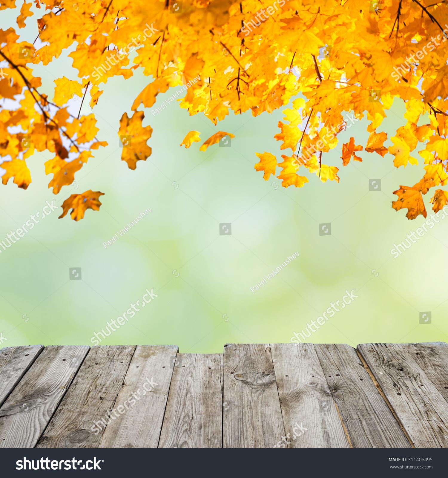 Orange Fall Leaves Over Wooden Desk Stock Photo 311405495