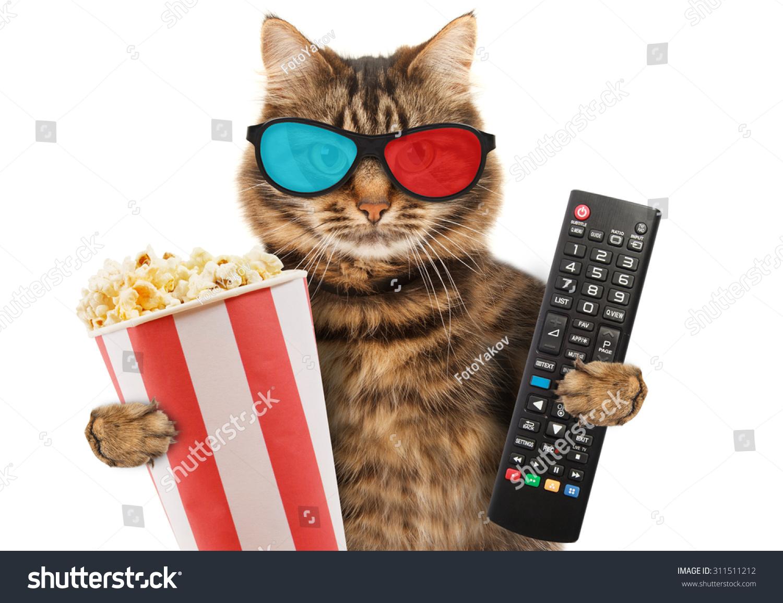 Cat Dog Popcorn