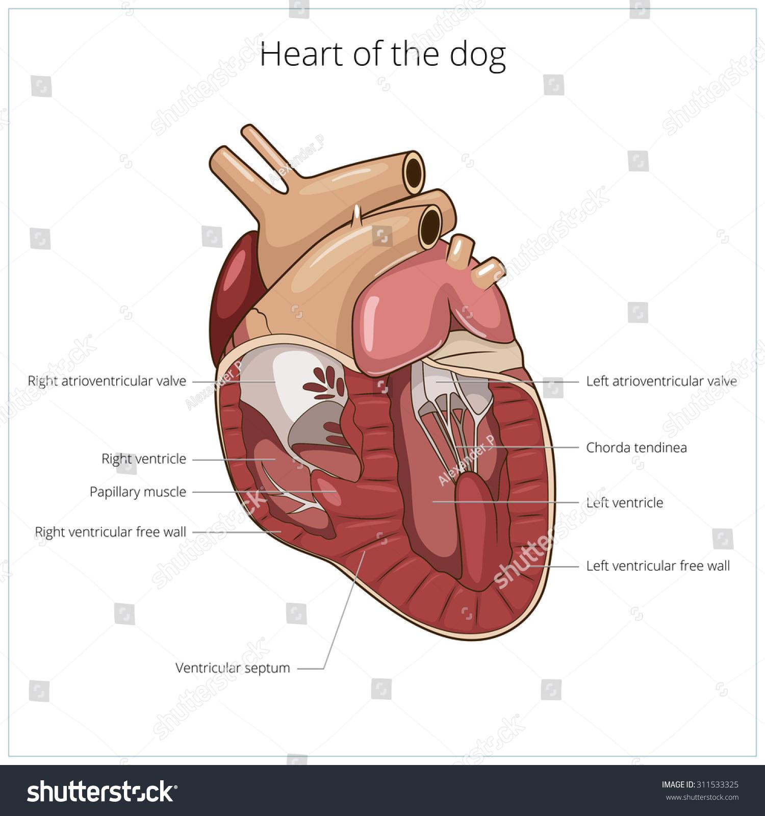Heart Dog Vector Illustration Stock Vector 311533325 - Shutterstock