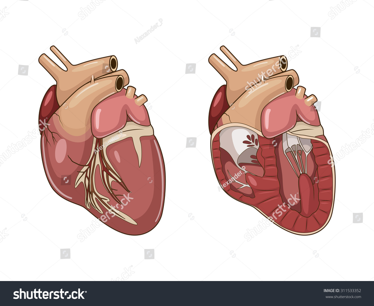 Heart Dog Vector Illustration Stock Photo (Photo, Vector ...