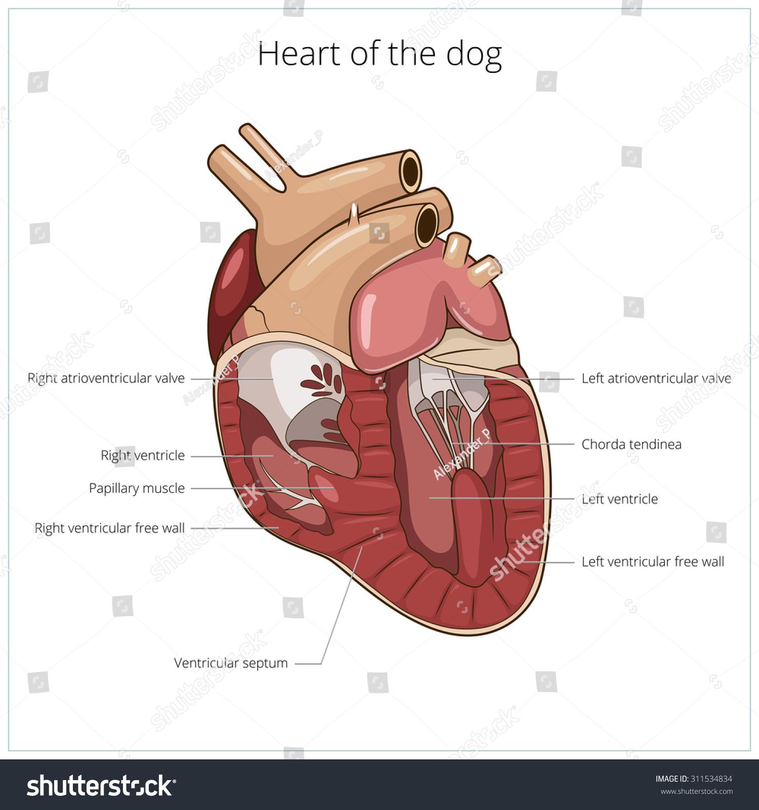 Heart Dog Raster Version Stock Illustration - Royalty Free Stock ...
