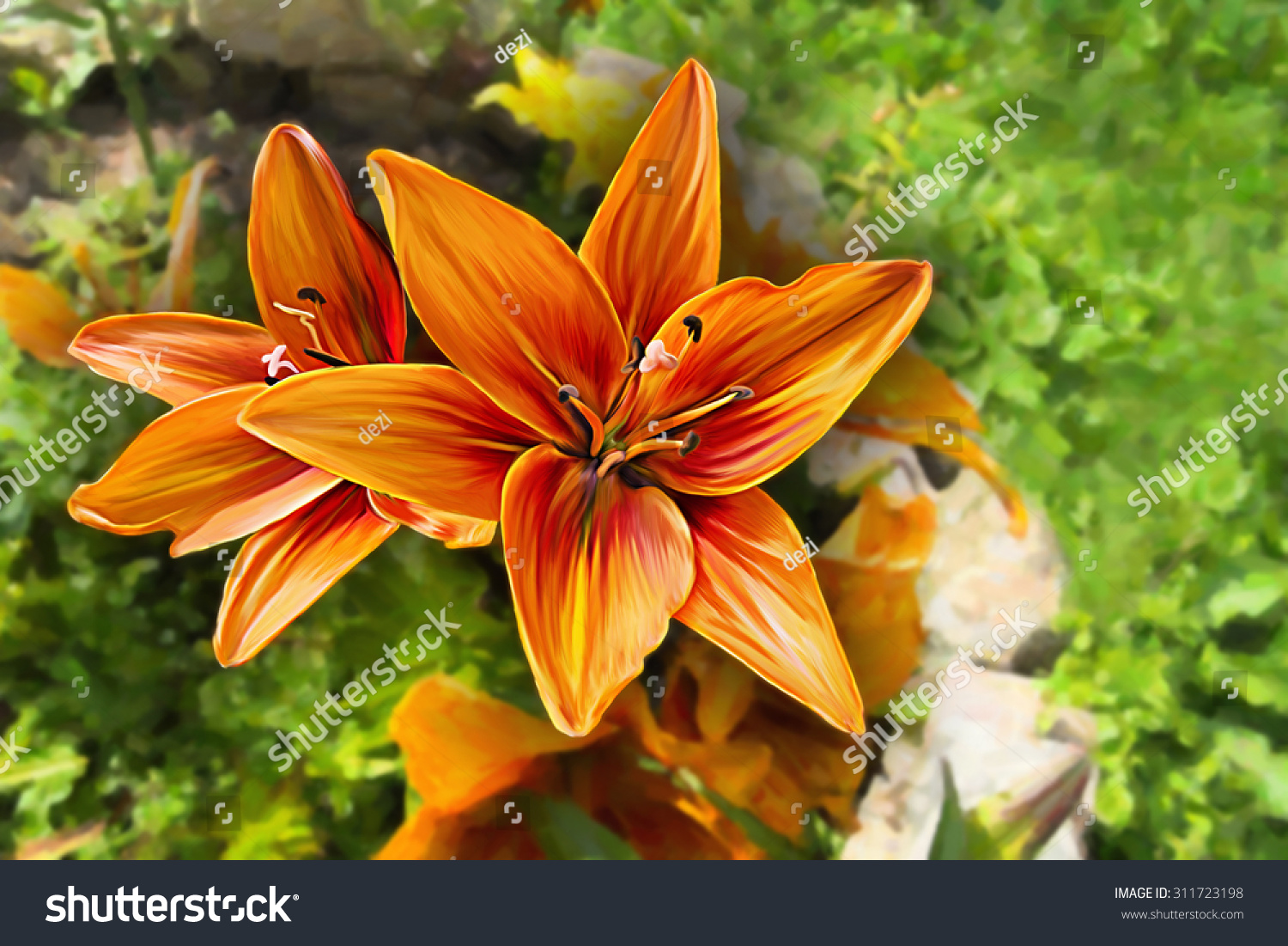 Drawing Lily Flower Oil Painting On Stock Illustration 311723198