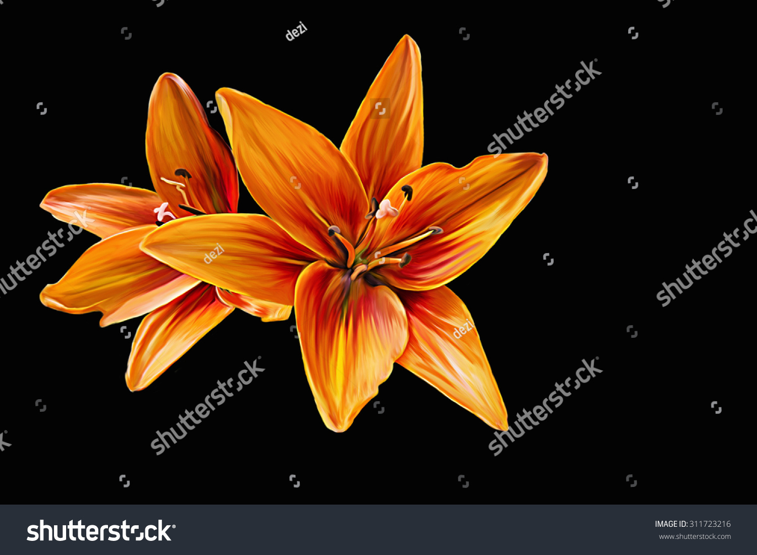 Royalty Free Stock Illustration Of Drawing Lily Flower Oil Painting