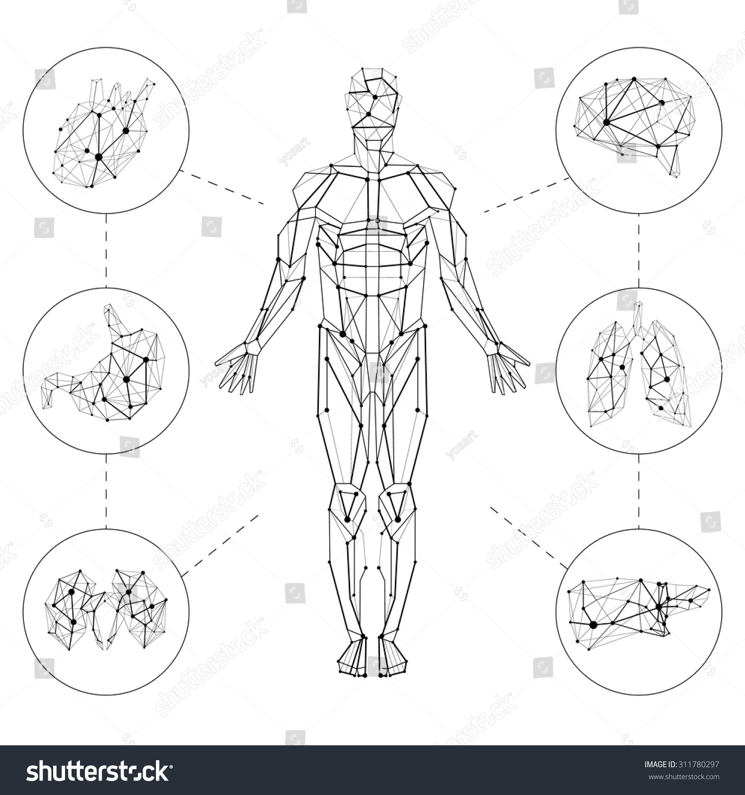 Carcass polygonal geometric lines Human with internal organs set composition on white background