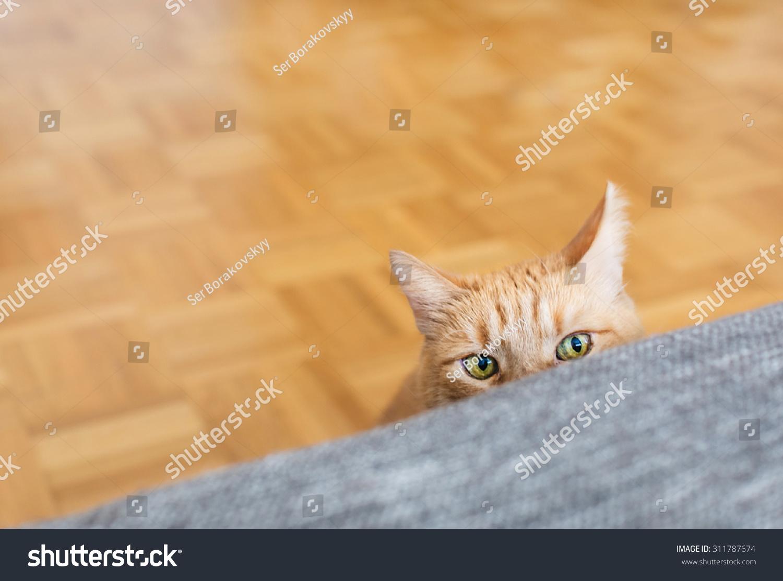 stop my cat crying at night
