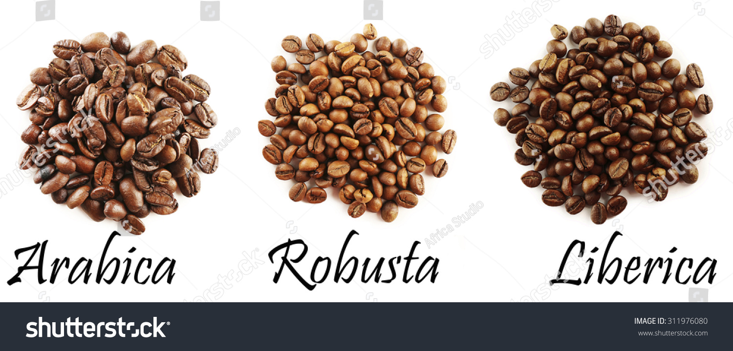 Different Coffee Beans Isolated On White Stock Photo Edit Now Green Bean Kopi Diet Java Robusta