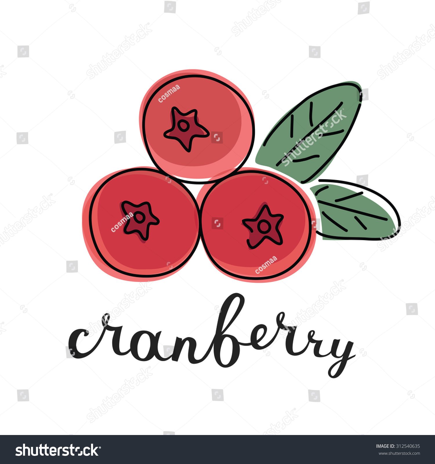 Vector Color Illustration Cranberry Inking Lettering Stock Vector