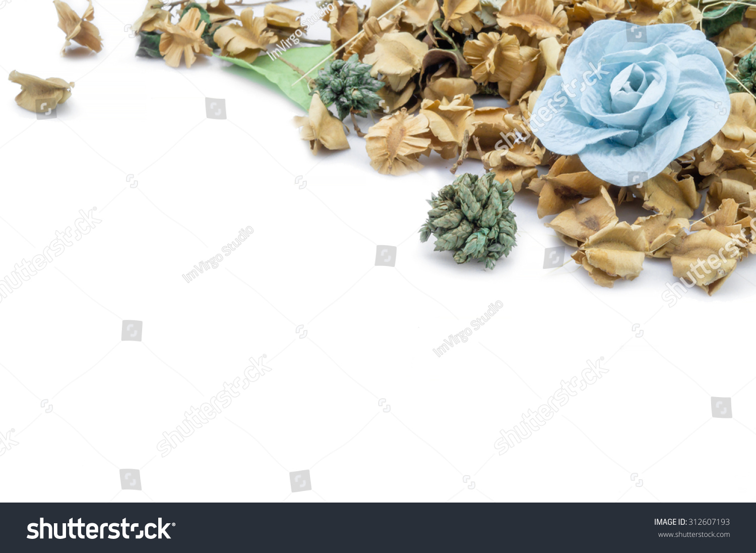 Paper Flowers Dried Seeds On White Stock Photo Royalty Free