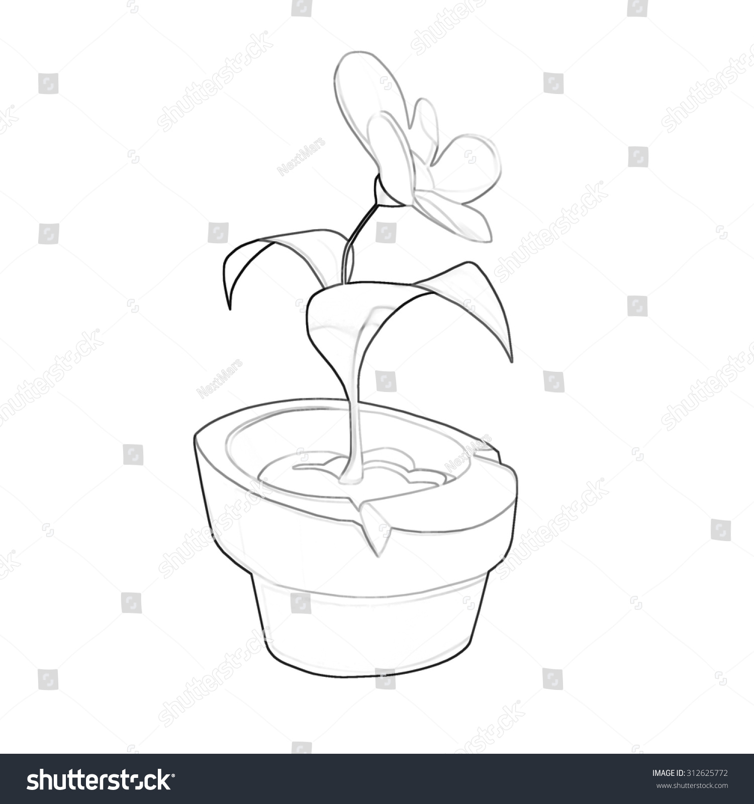 Illustration Coloring Book Series Potted Flower Stock Illustration ...