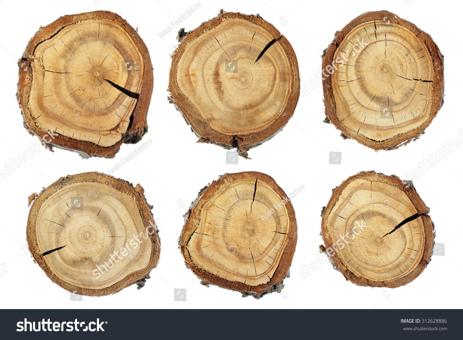 Wood slice texture set slices wood stock photo 312628886 for Tree trunk slice ideas
