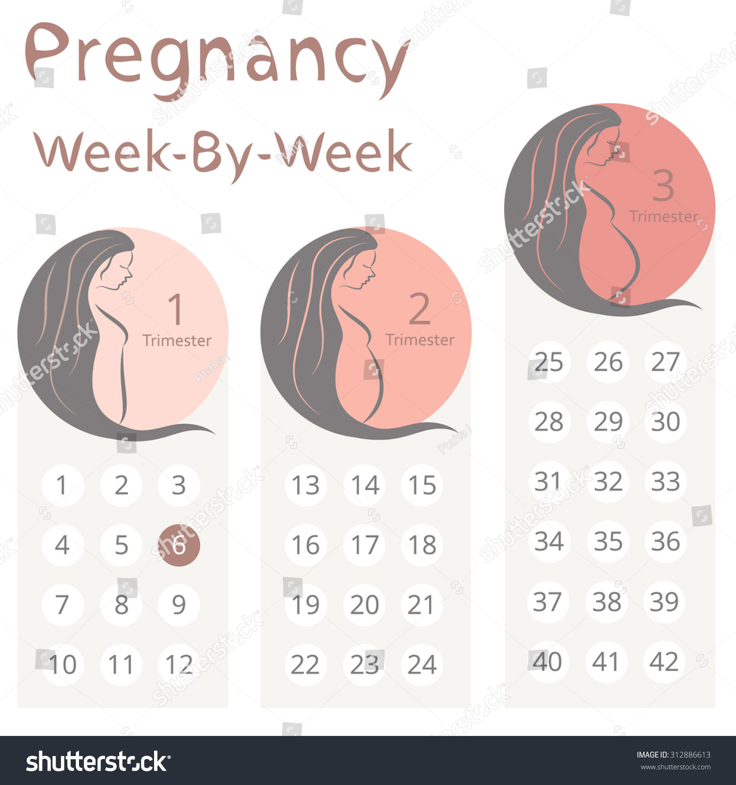 Pope Pregnant calenders Youthful