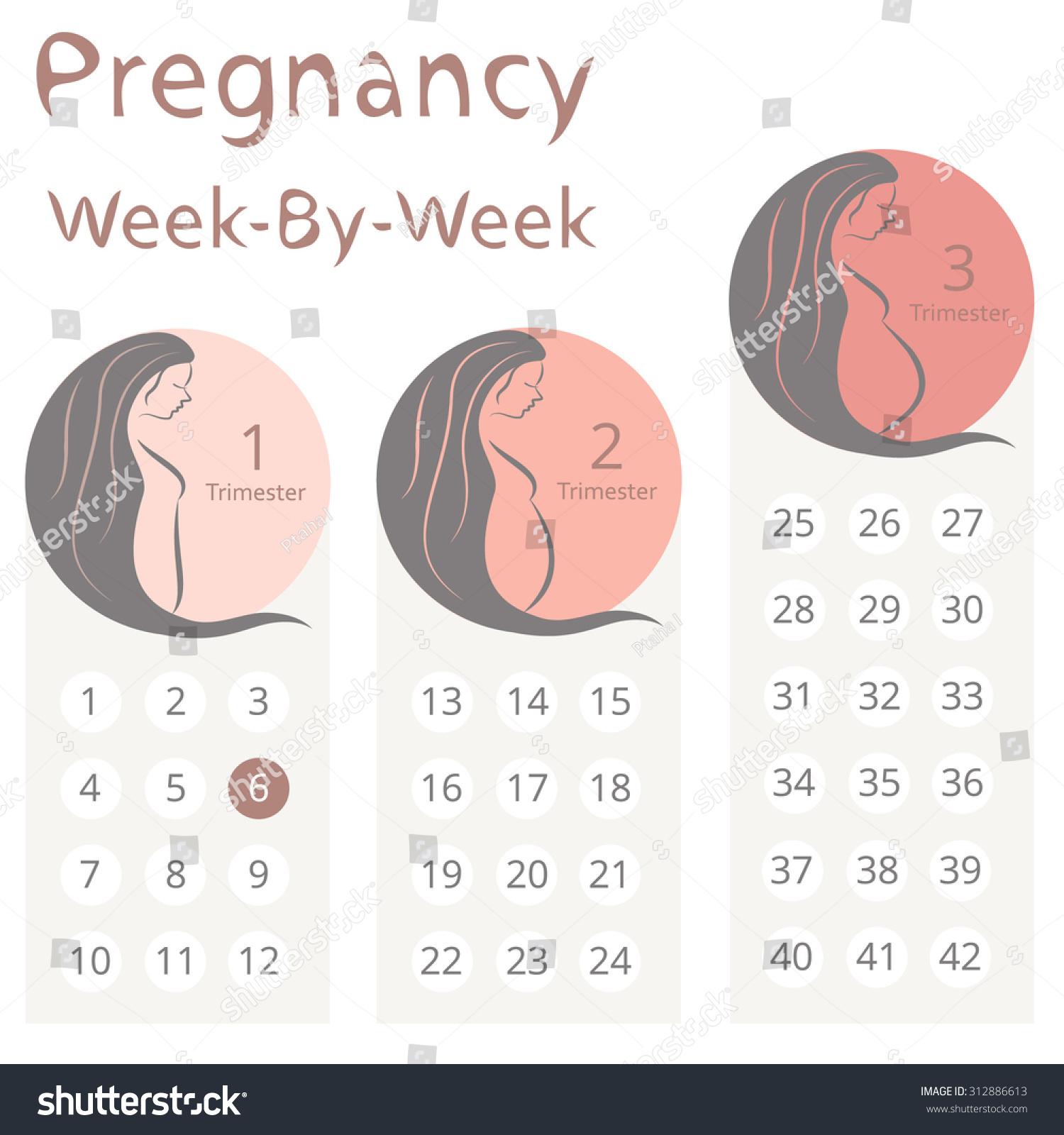 Беременна календарь о ребенок