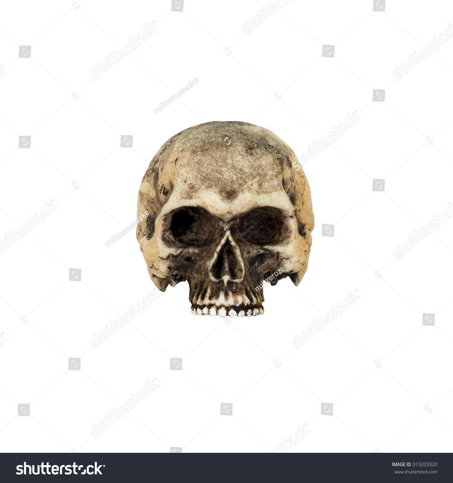 Human Skull Front Isolated On White Stock Photo Edit Now 313203320