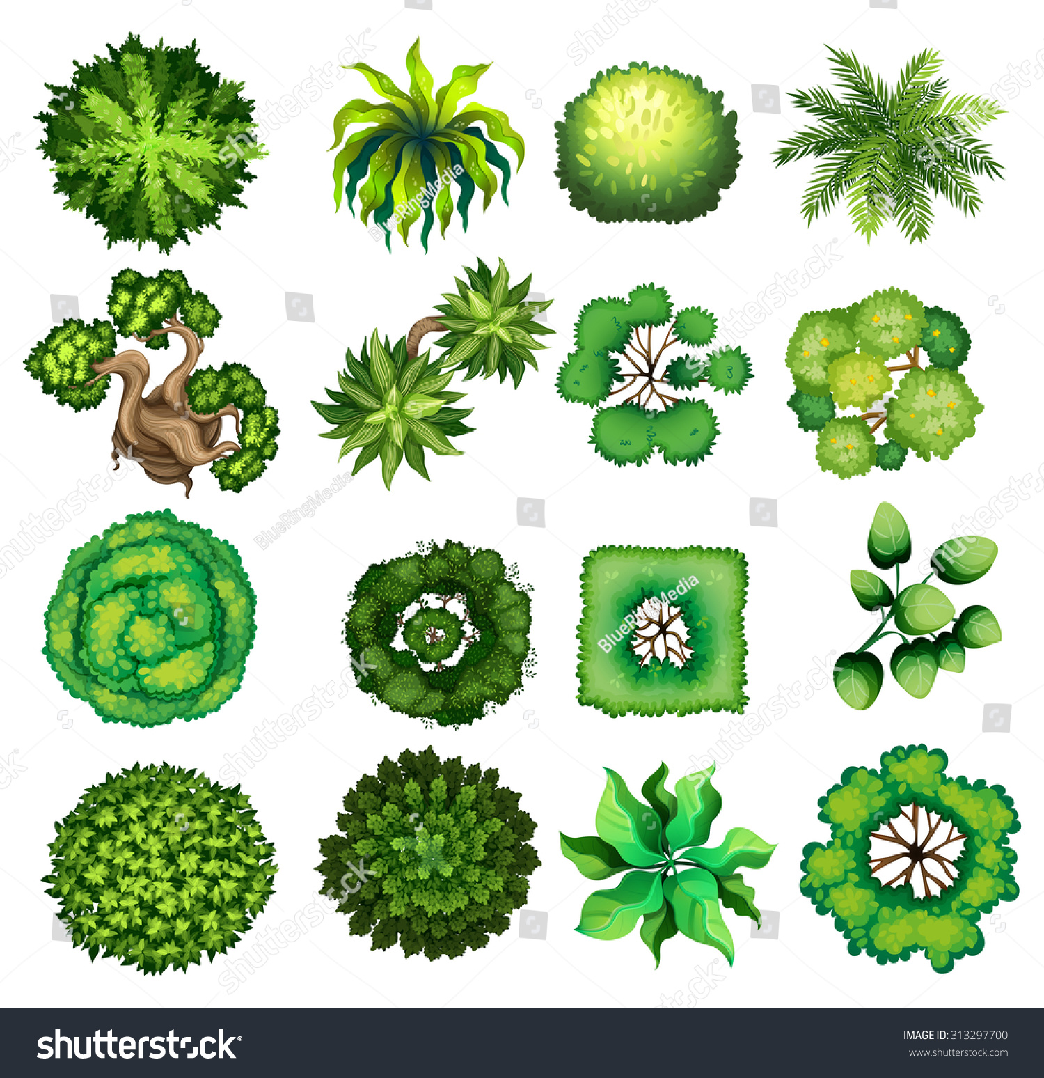 Plant top view vector in group download free vector art stock -  Vectors Illustrations Footage Music Top View Of Different Kind Of Plants Illustration