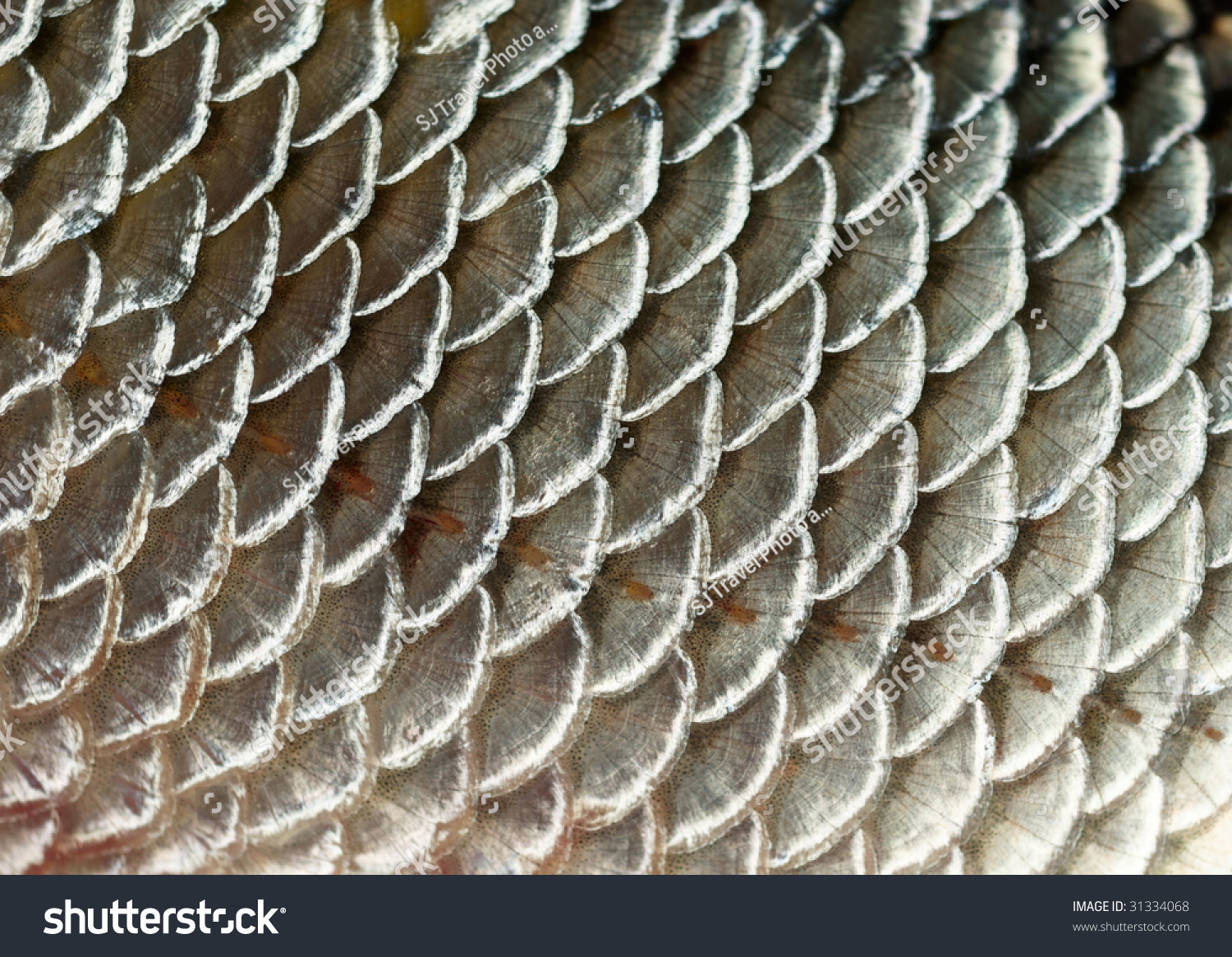 Fish scales background stock photo 31334068 shutterstock for Do all fish have scales