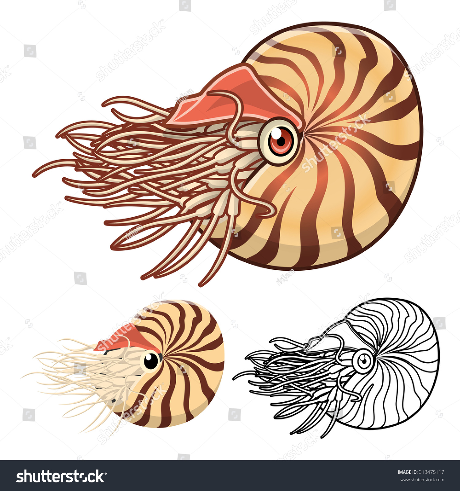 Line Art Nautilus : High quality nautilus cartoon character include stock