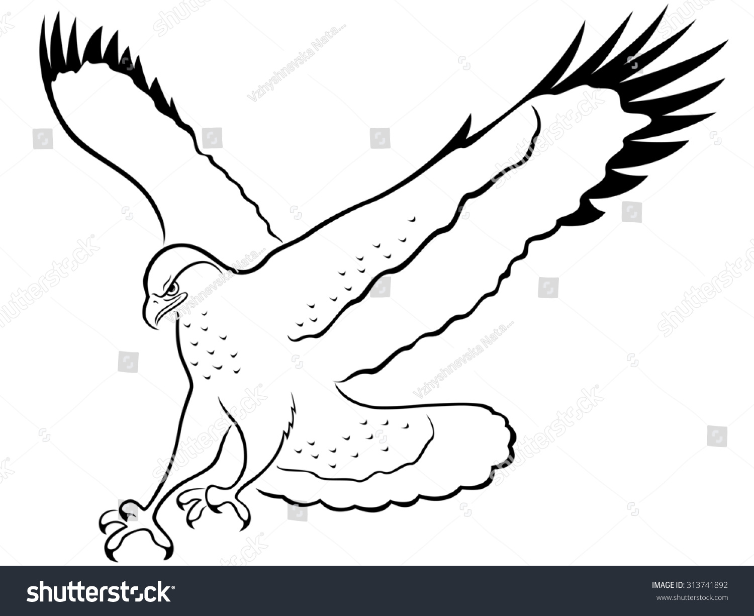how to draw a hawk simple