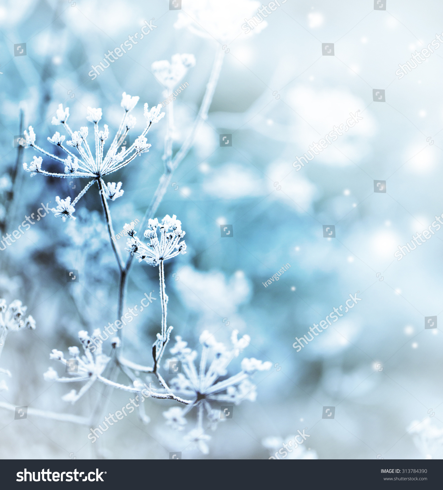 Winter landscape.Winter scene Frozenned flower