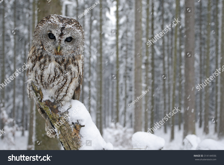 how to create a owl habitat