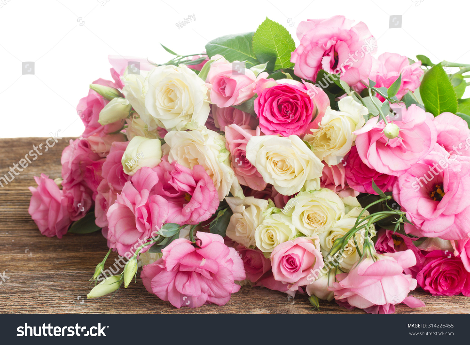 Pink And White Fresh Ranunculus Flowers Close Up Isolated On White
