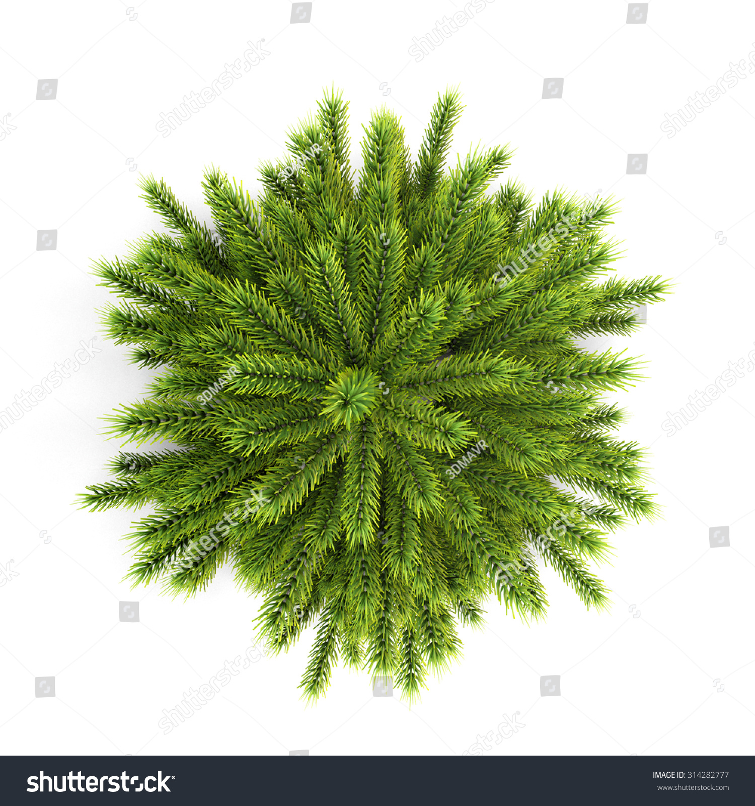 Christmas Trees Without Ornaments top view christmas tree without ornaments stock illustration