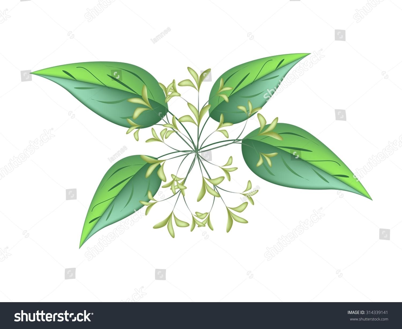 Beautiful Flower Illustration White Tuberose Flowers Stock Vector Hd