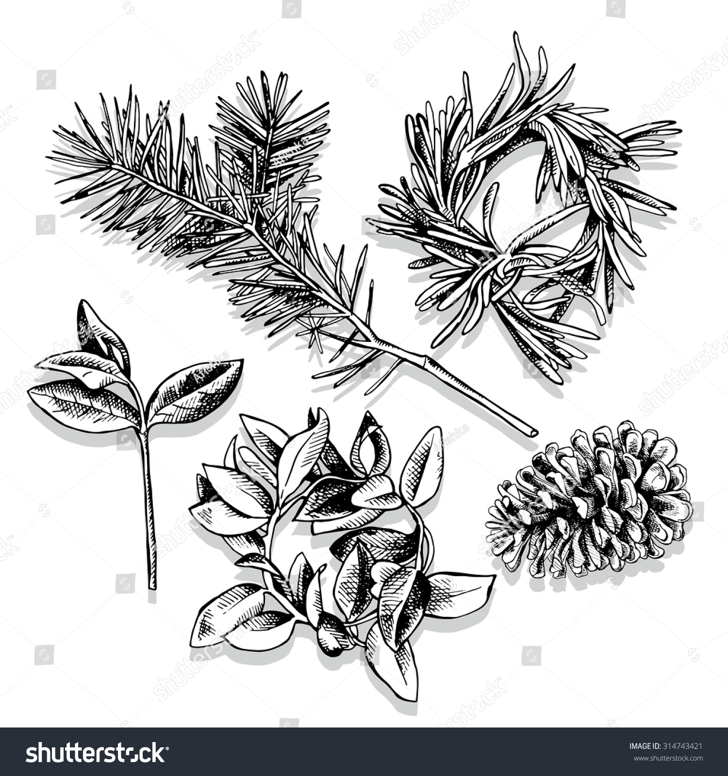 Pine Cone Illustration Set Images Christmas W...