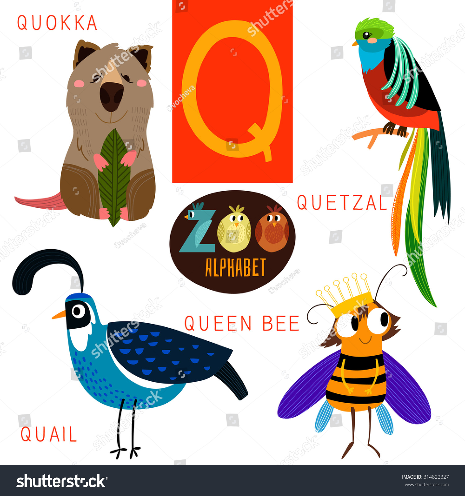 animal with letter q zoo alphabet in vector q letter 4782