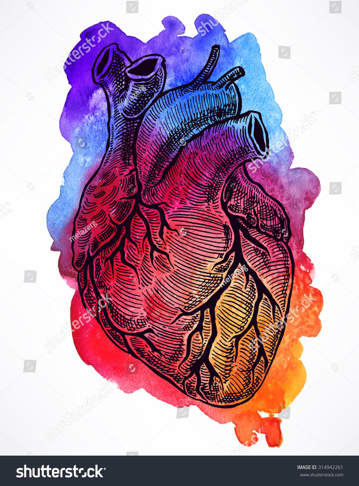 Sienna Morris - Wikipedia   Human Heart Art