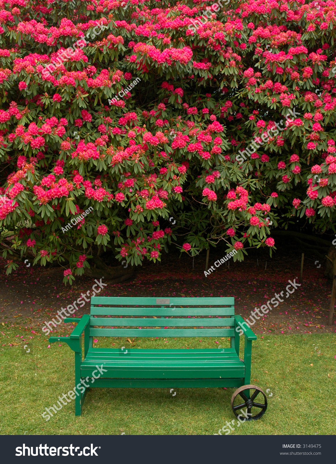 Green Park Bench Pink Flowers Background Stock Photo 3149475 ... for Park Background With Bench  165jwn