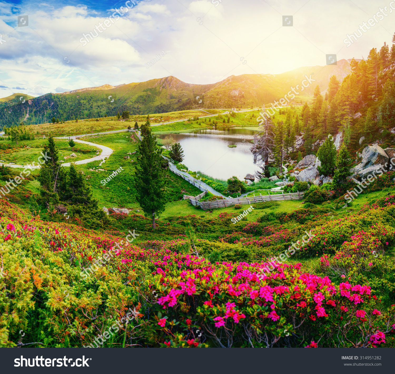 Glade With Flowers Near The Water In Mountains