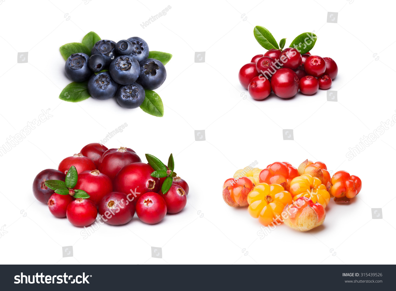 set of wild northern berries bilberry cloudberry lingonberry cranberry studio shoot large. Black Bedroom Furniture Sets. Home Design Ideas