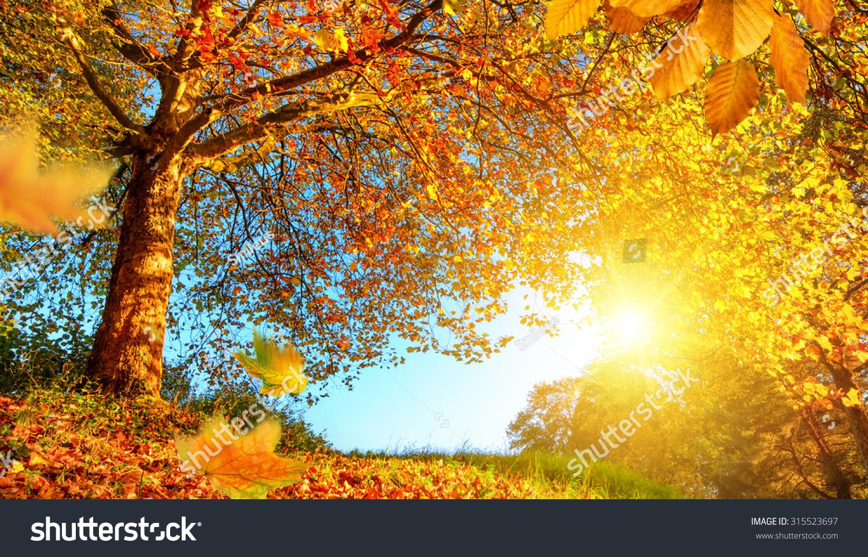 Golden Autumn Scenery Nice Tree Falling Stock Photo