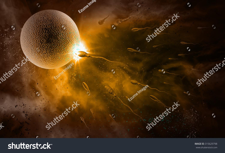 sperm fertile egg
