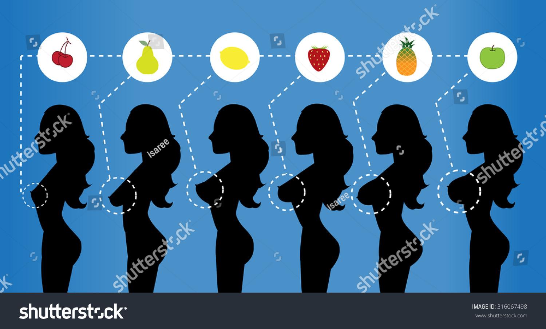 Woman Breast Sizevector Stock Vector 316067498 - Shutterstock