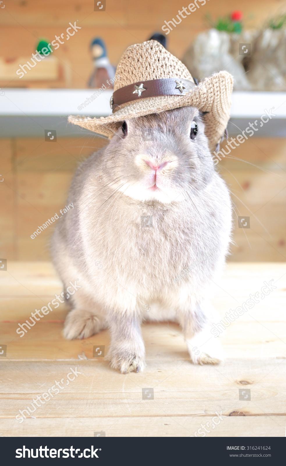 Adorable Rabbit Wearing Cowboy Hat Netherland Stock Photo (Edit Now ... 0426cad38c8
