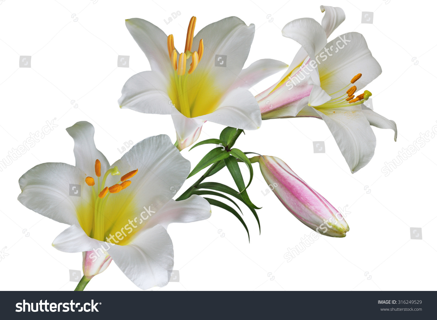 Multi color lily flower bouquet isolated stock photo 100 legal multi color lily flower bouquet isolated on white background izmirmasajfo