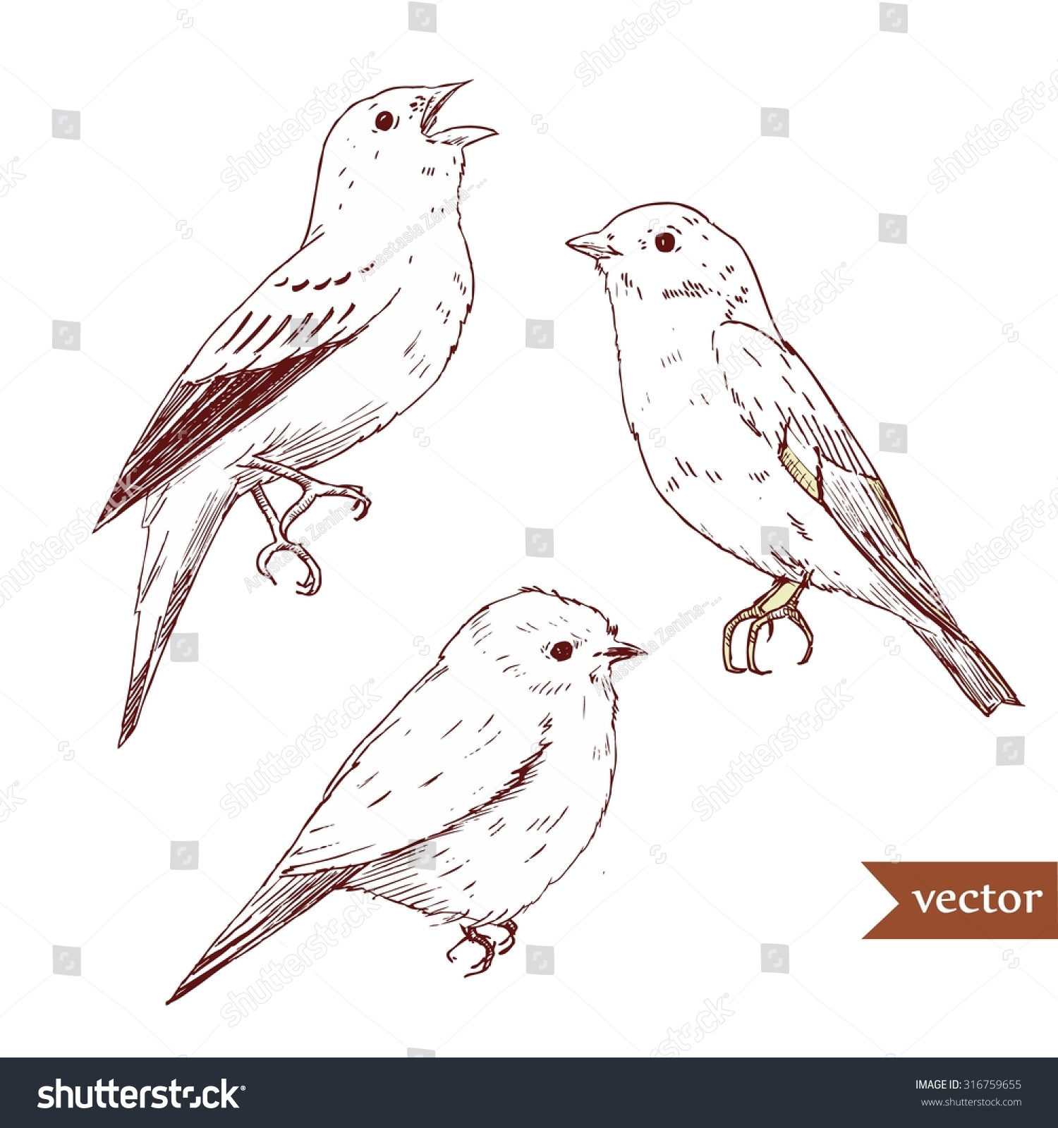 vector isolated drawing bird drawing pen stock vector 316759655