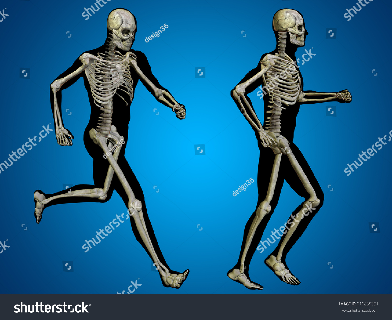 Unique Male Skeleton Anatomy Pattern Internal Organs Diagram