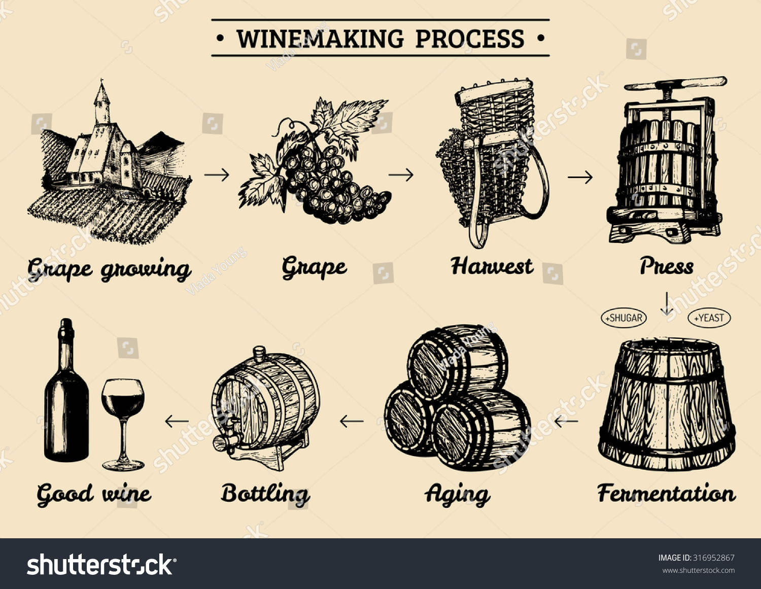 wine production diagram  wine  free engine image for user