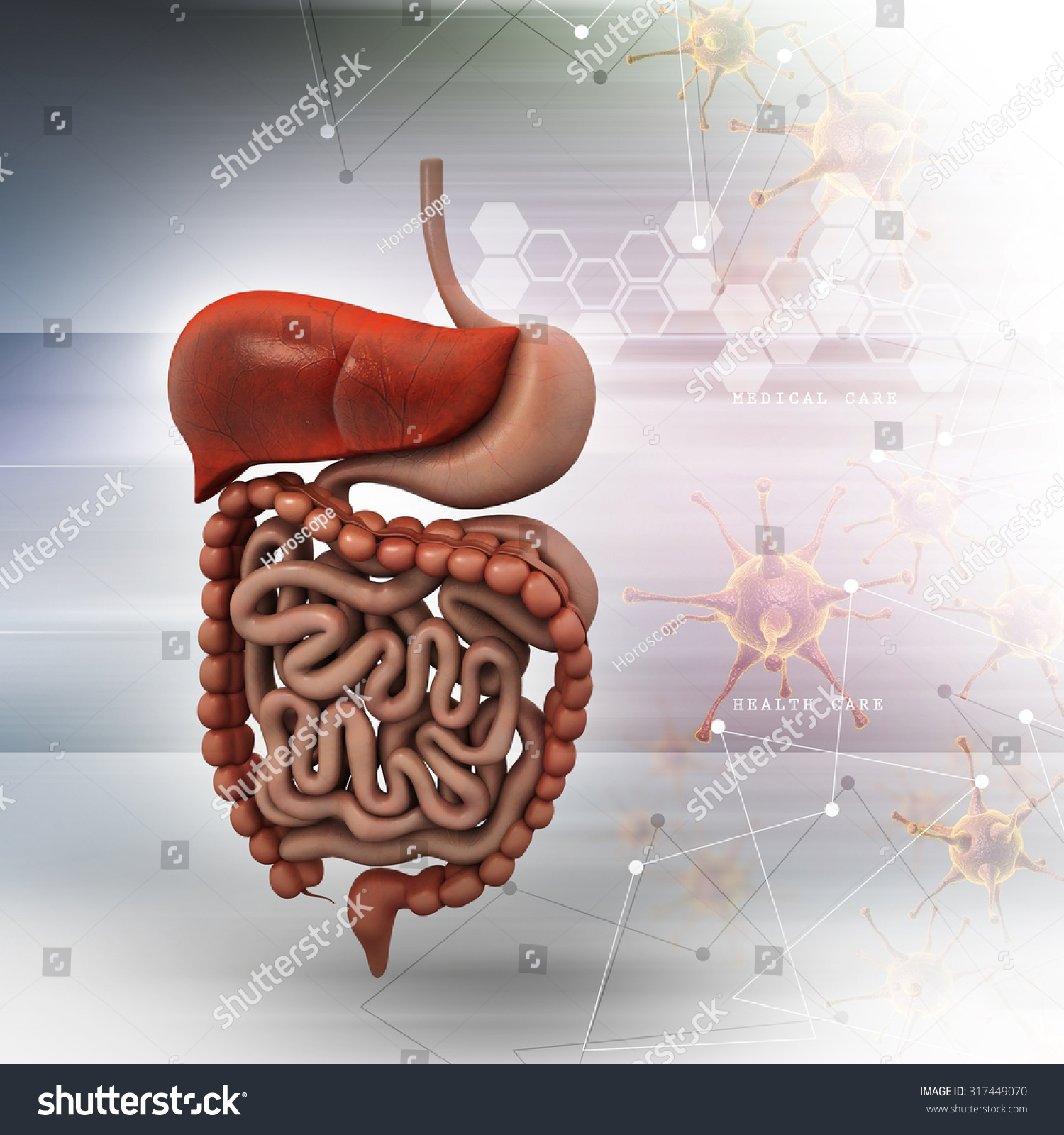human digestive system with color background