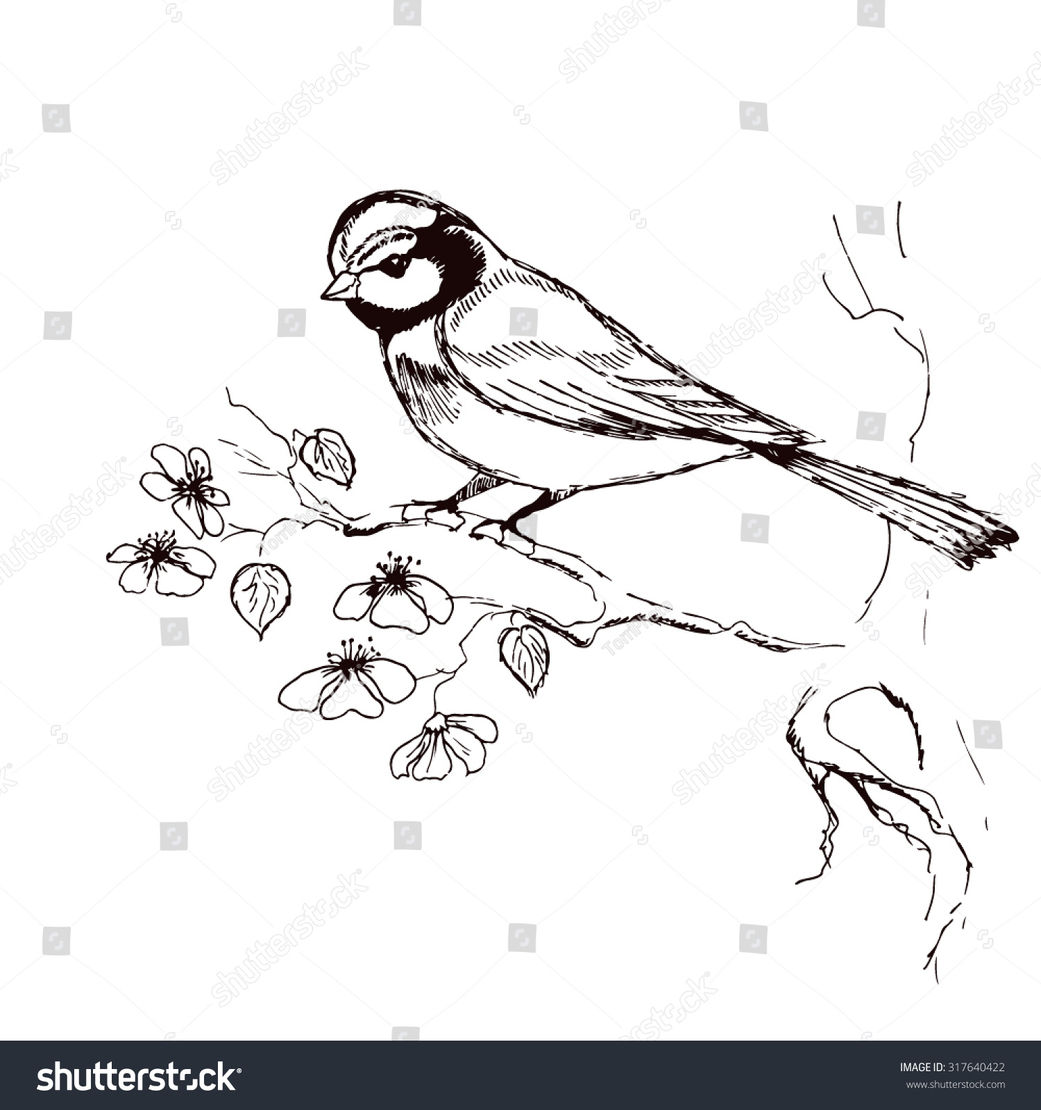Sketch Titmouse Bird Sitting On Flowering Stock Vector 317640422 - Shutterstock